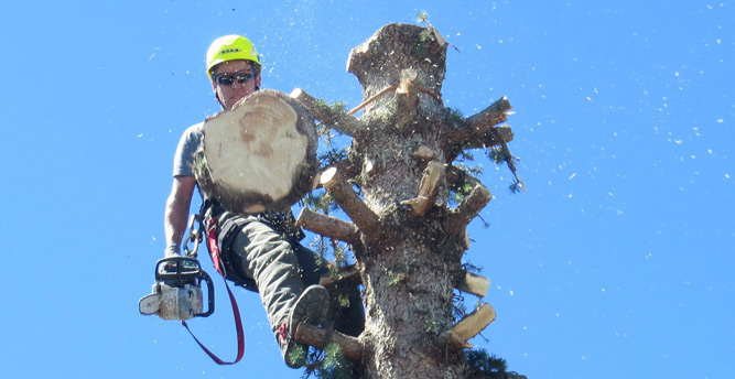 Arborist Crew Leader